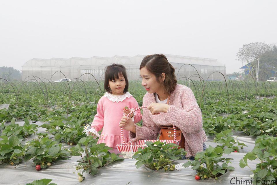 Chimi Farm 4 tại Nhật Tân, Đông Anh vừa khai trương đầu năm 2020