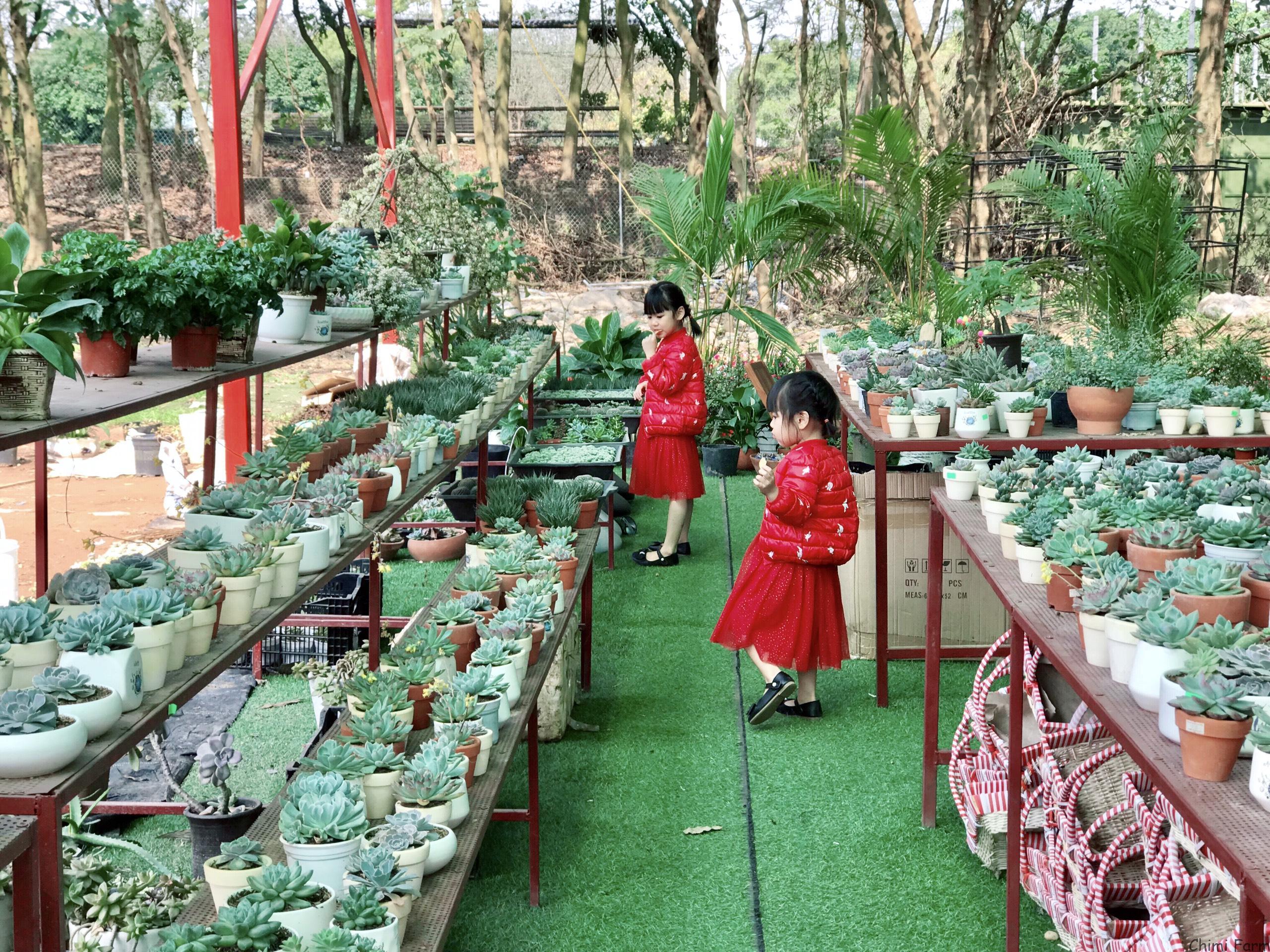 Quầy cây cảnh mini của Chimi Farm 3 Âu Cơ