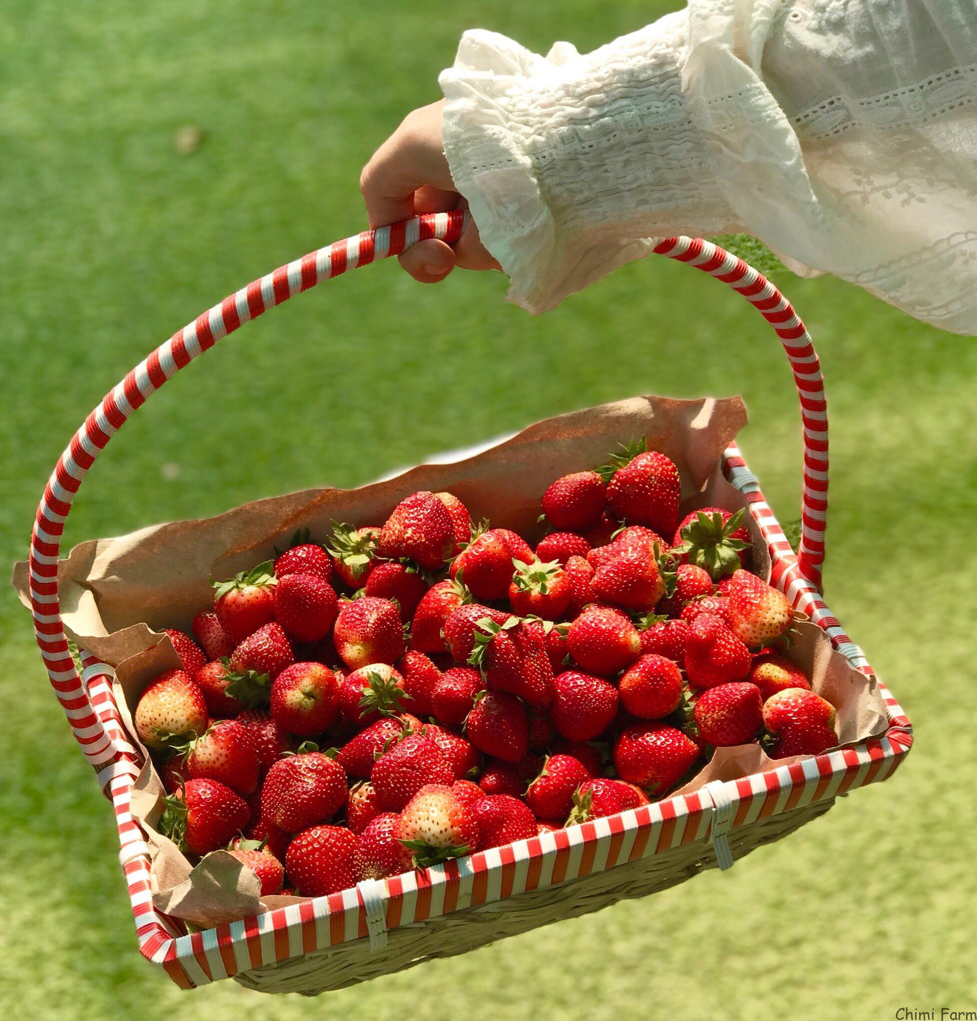 Những trái dâu tây Nhật Bản ngọt lịm và chín đỏ