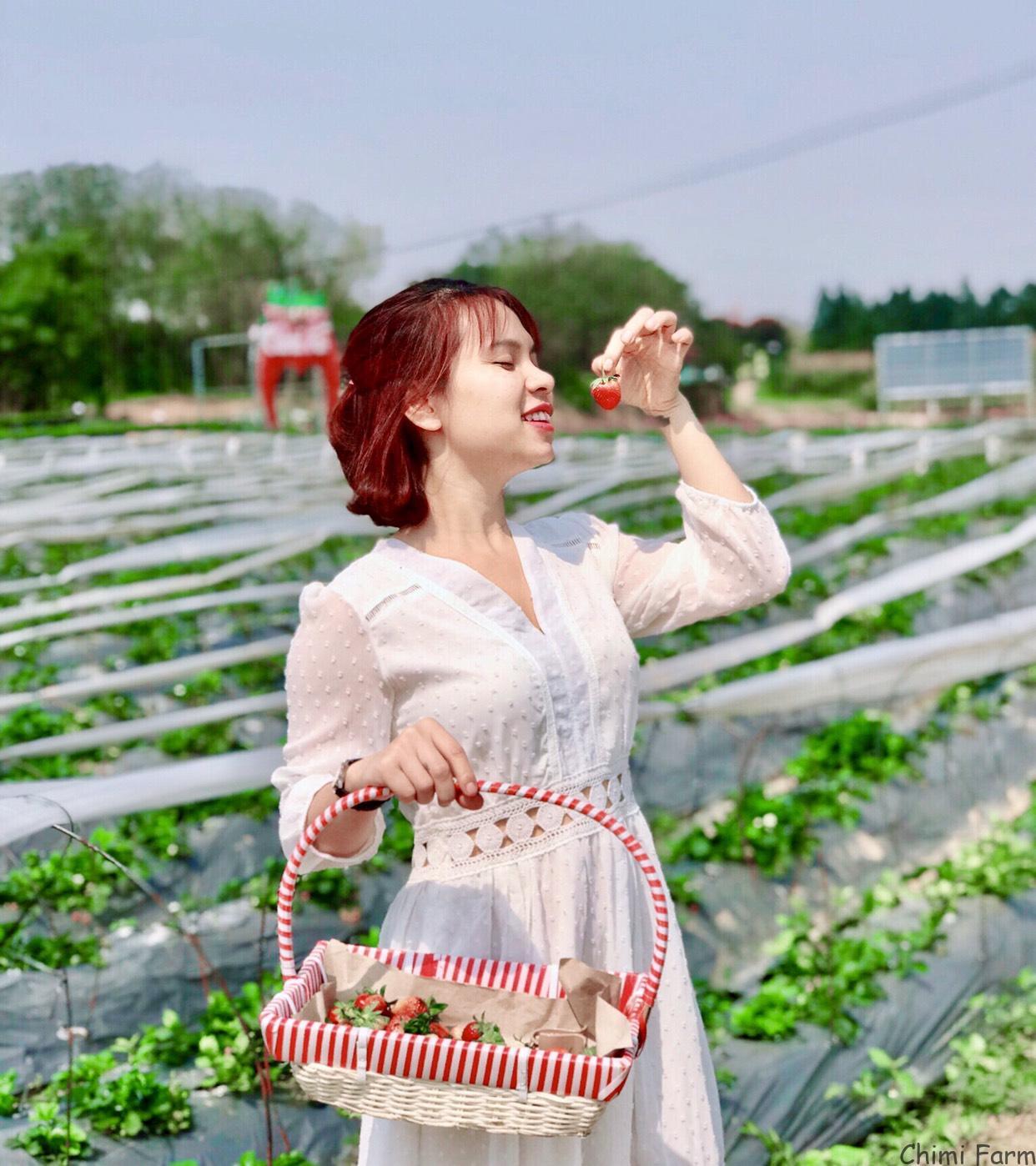 Chụp ảnh vườn dâu Chimi vào một ngày nắng đẹp