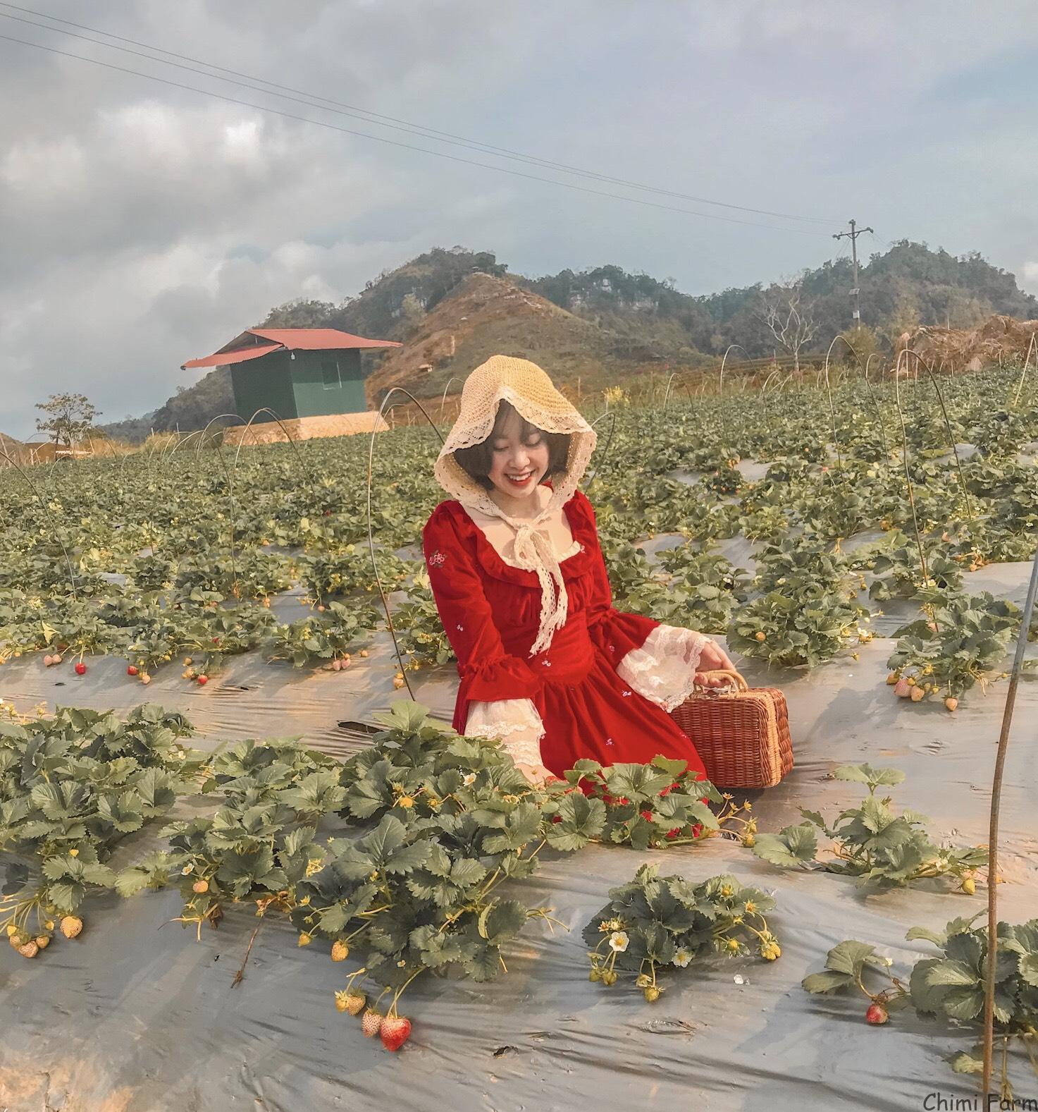Hướng dẫn trải nghiệm Chimi Farm - Trang trại dâu tây Chimi