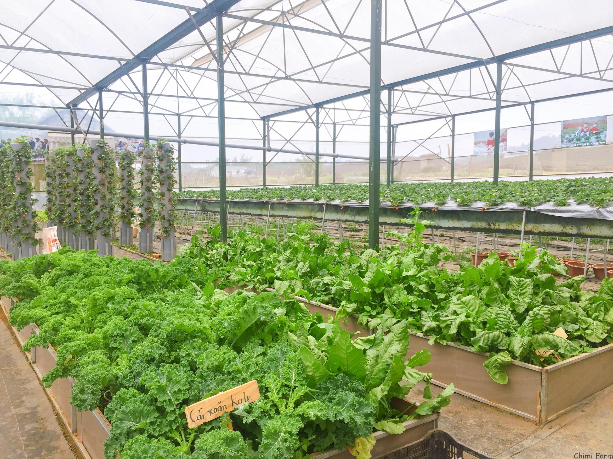 Cảnh quan của Chimi farm 2 bên cạnh đồi chè trái tim