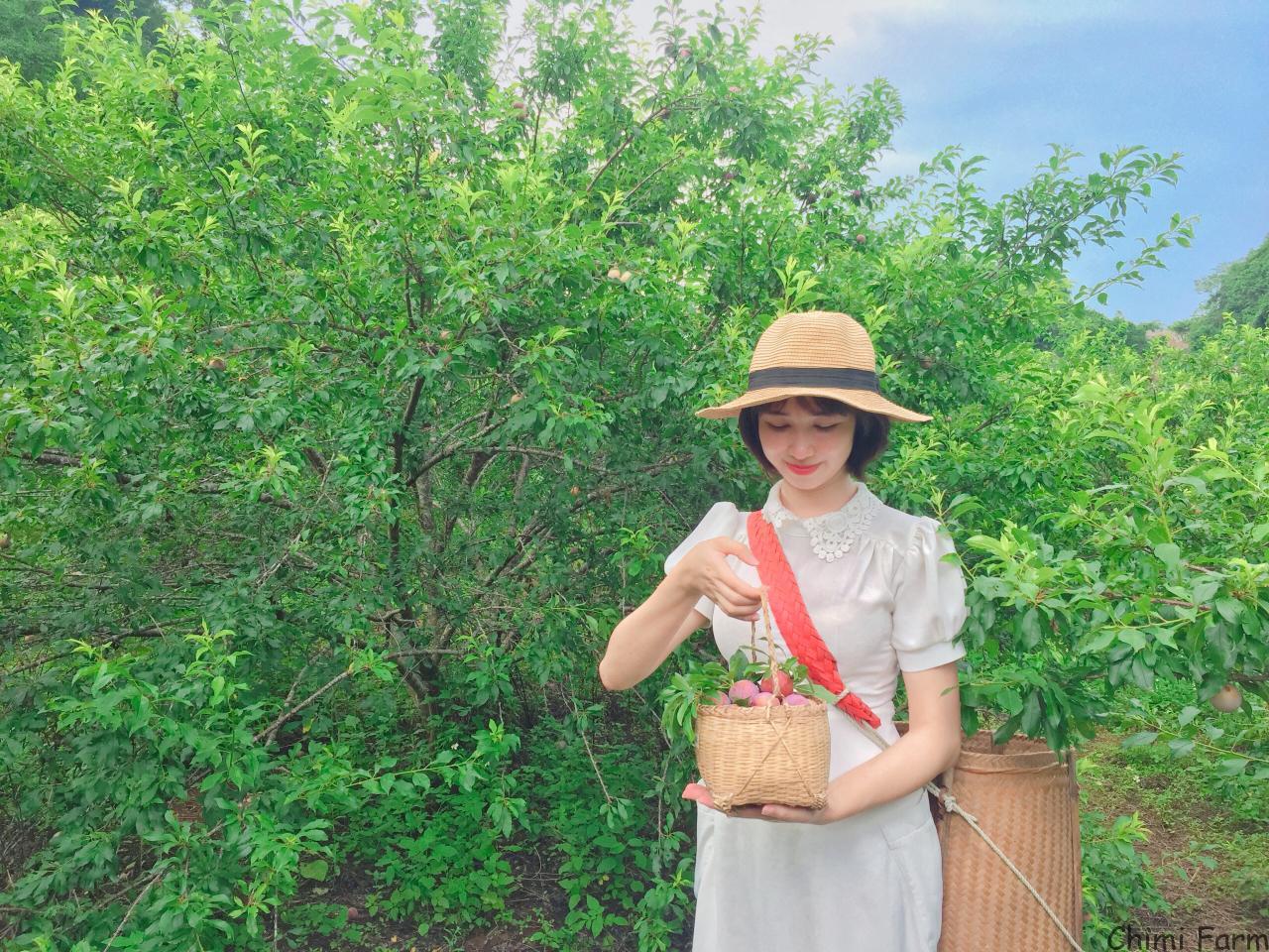 Đi Mộc Châu hái mận vào tháng 5