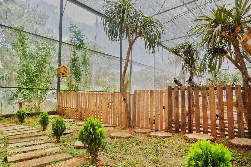 Khu vườn nhiệt đới mini của Trang trại dâu tây Chimi