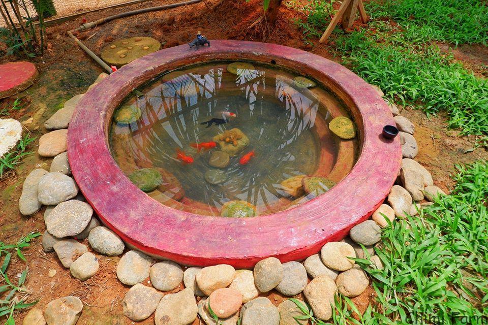 Hồ cá vàng mini của khu vườn thú