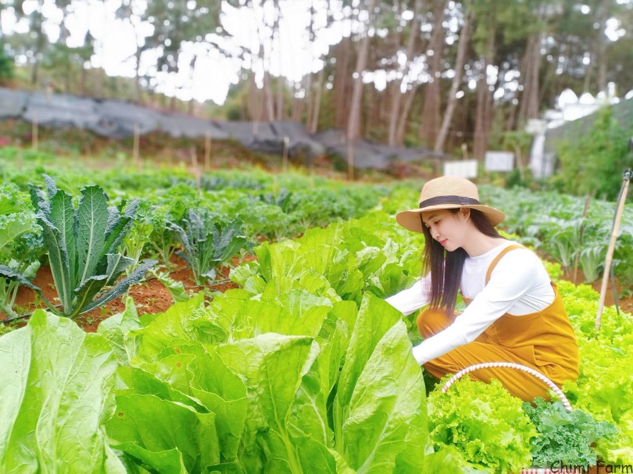 Du khách có thể tự tay trải nghiệm hái rau tại vườn