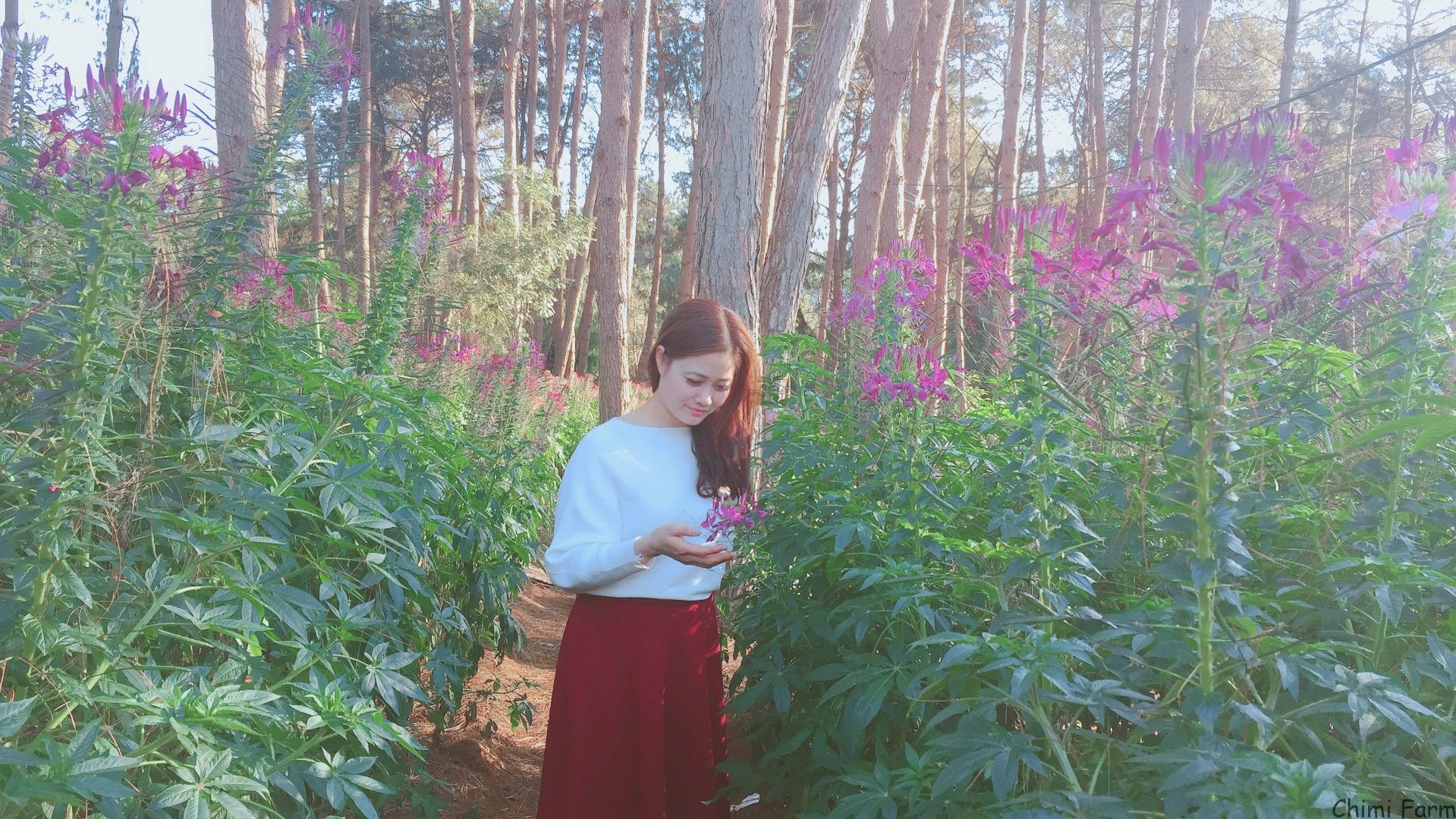 Hoa túy điệp thuộc giống cây thân thảo chiều cao từ 1m đến 1m5