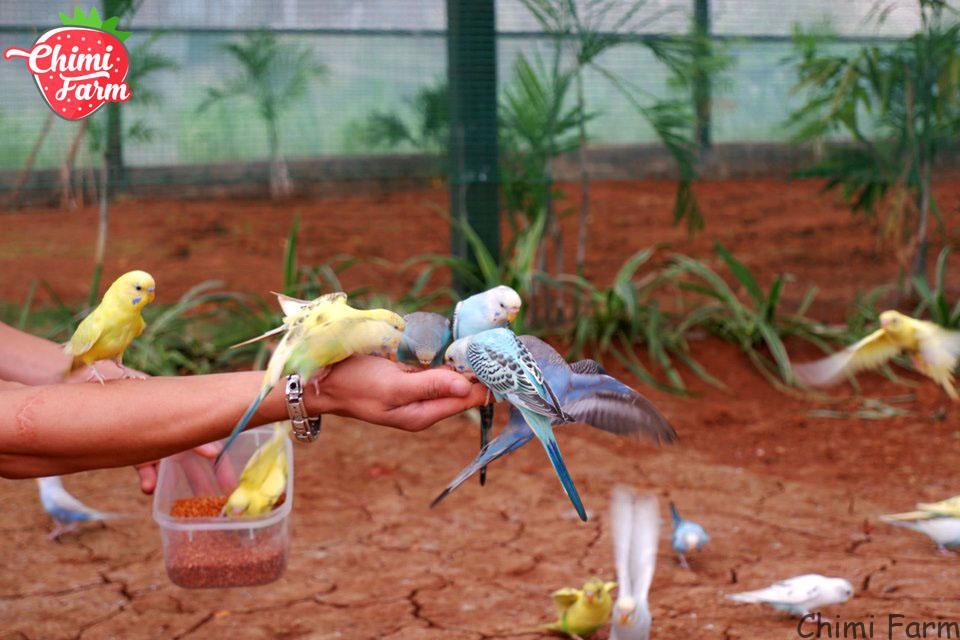 Du khách có thể trải nghiệm tự tay cho chim ăn