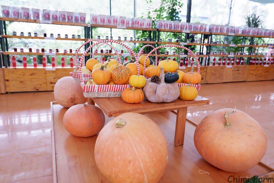 Những trái bí ngô khổng lồ Chimi Farm thường để dùng trang trí