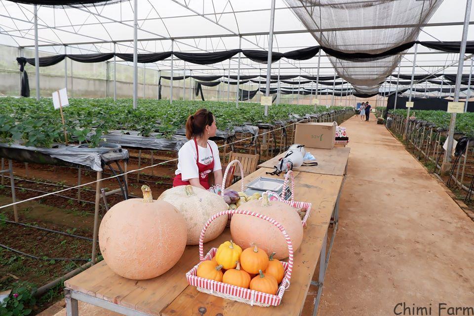 Kỹ thuật trồng và chăm sóc bí ngô khổng lồ