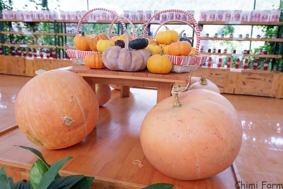 Những trái bí có thể nặng từ 20 - 50kg/quả