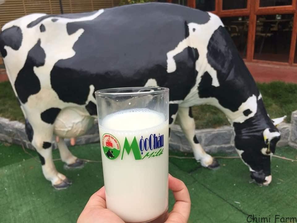 Sữa bò tươi là đặc sản của cao nguyên Mộc Châu