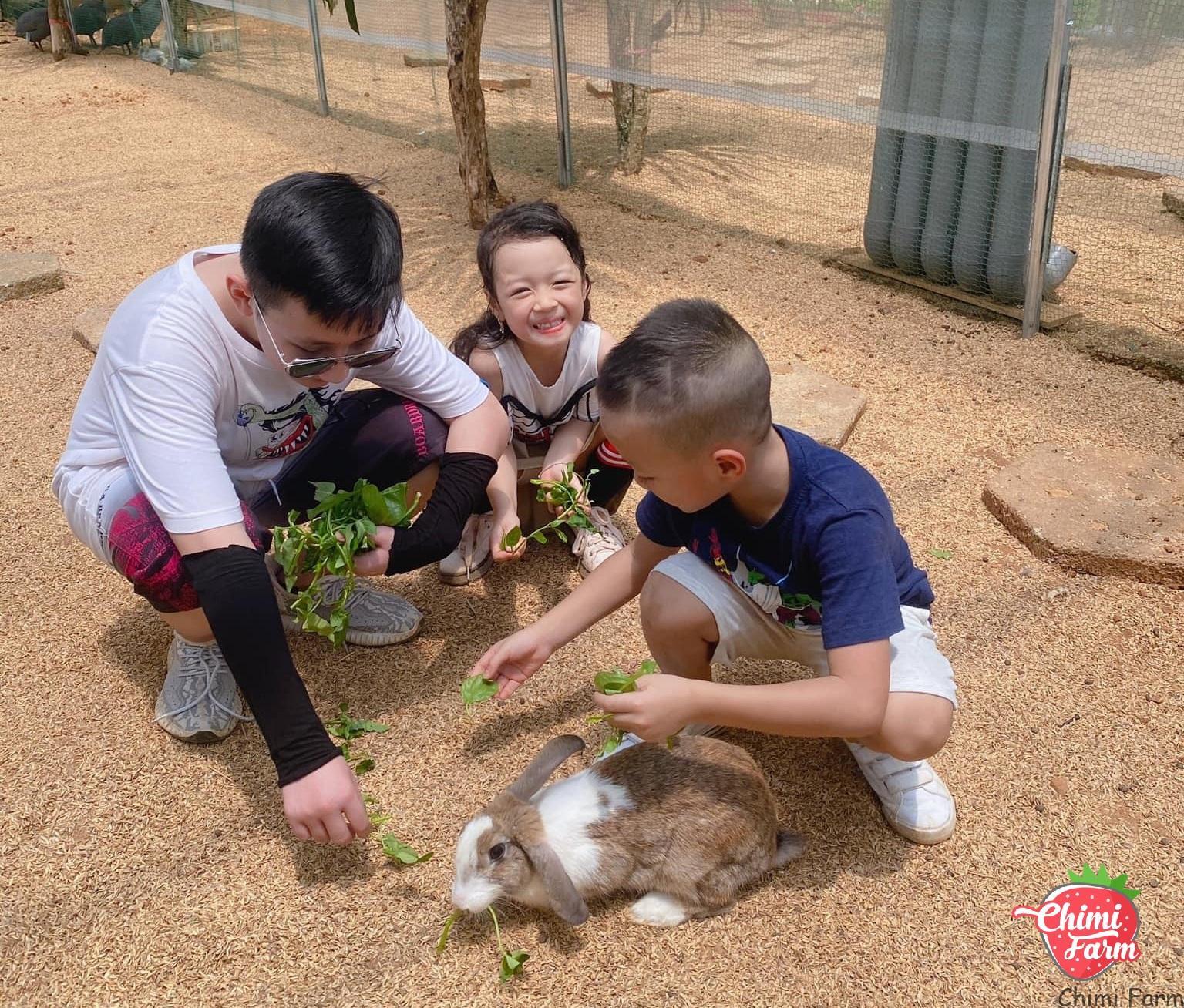 Bạn có thể chơi với các bé thỏ đáng yêu, nhưng nhớ nhẹ tay với các bạn ấy nha