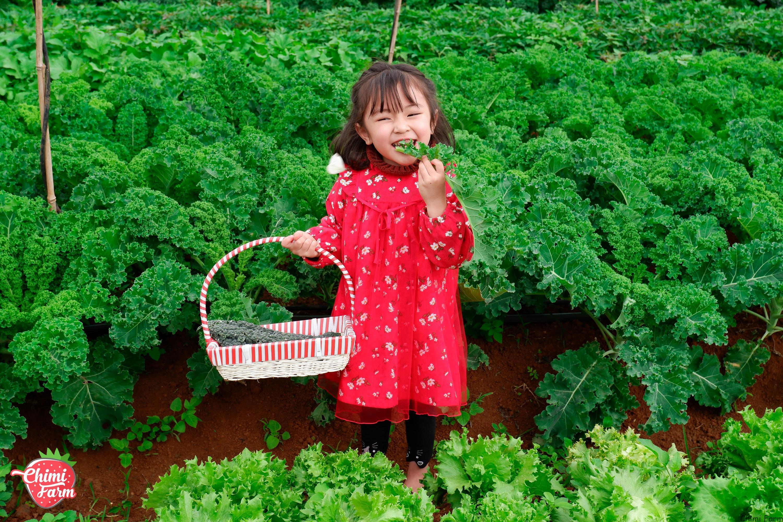"""Các em bé mê mẩn vườn cải kale của """"Nông trại vui vẻ Chimi"""""""