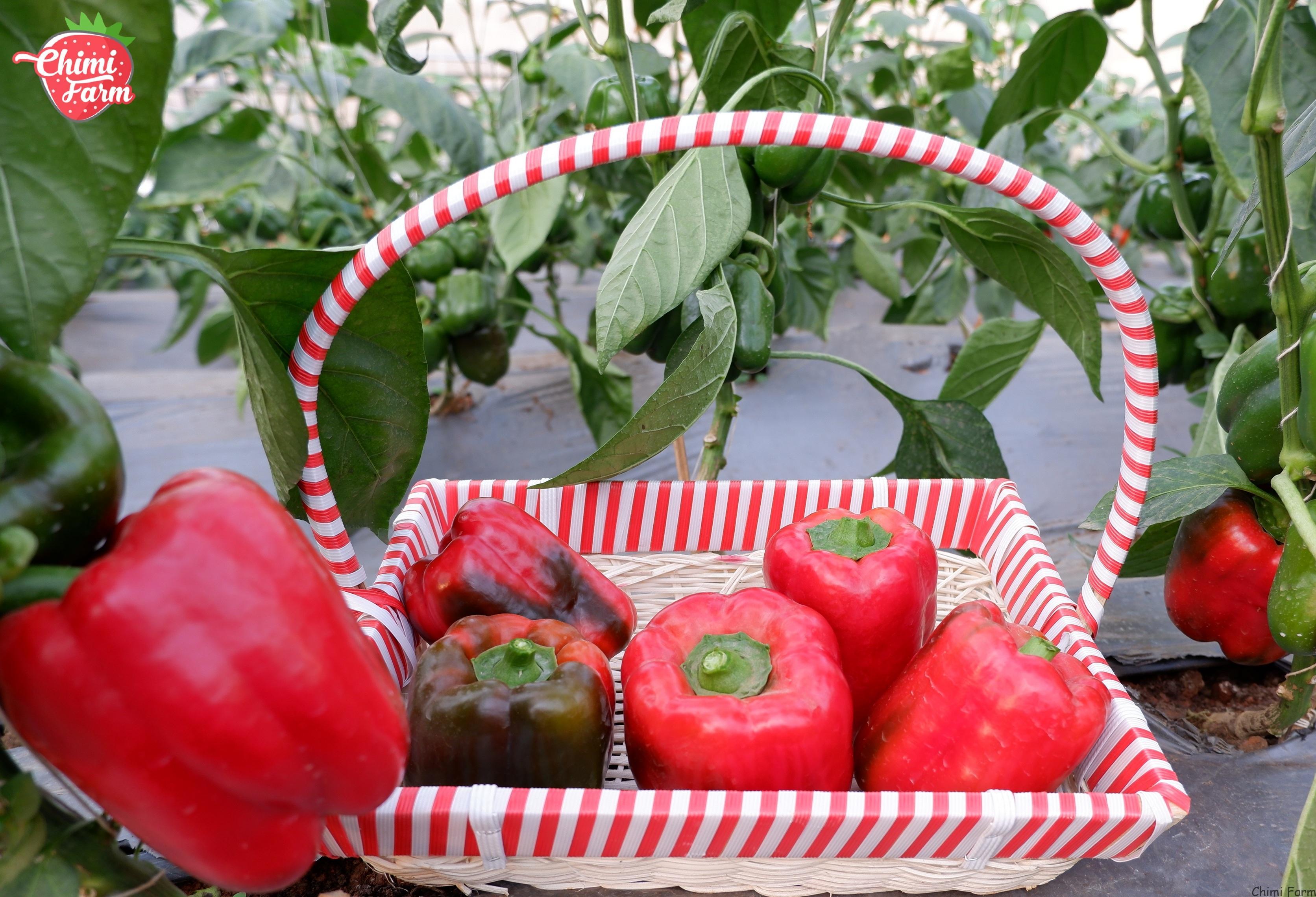 Ớt chuông cũng nằm trong top những loại thực phẩm chứa vitamin A