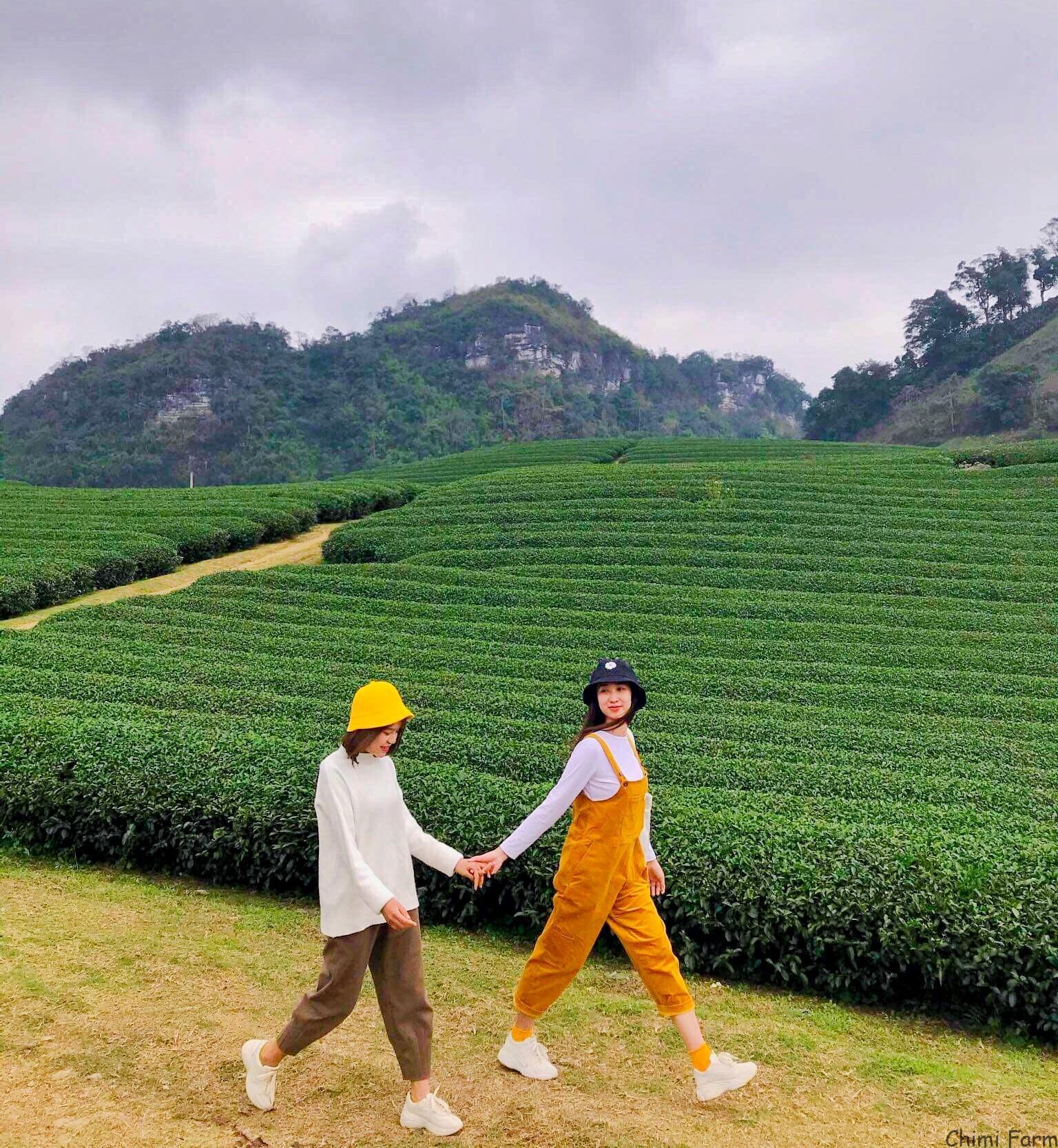 Đồi chè Mộc Châu là điểm du lịch không thể bỏ qua