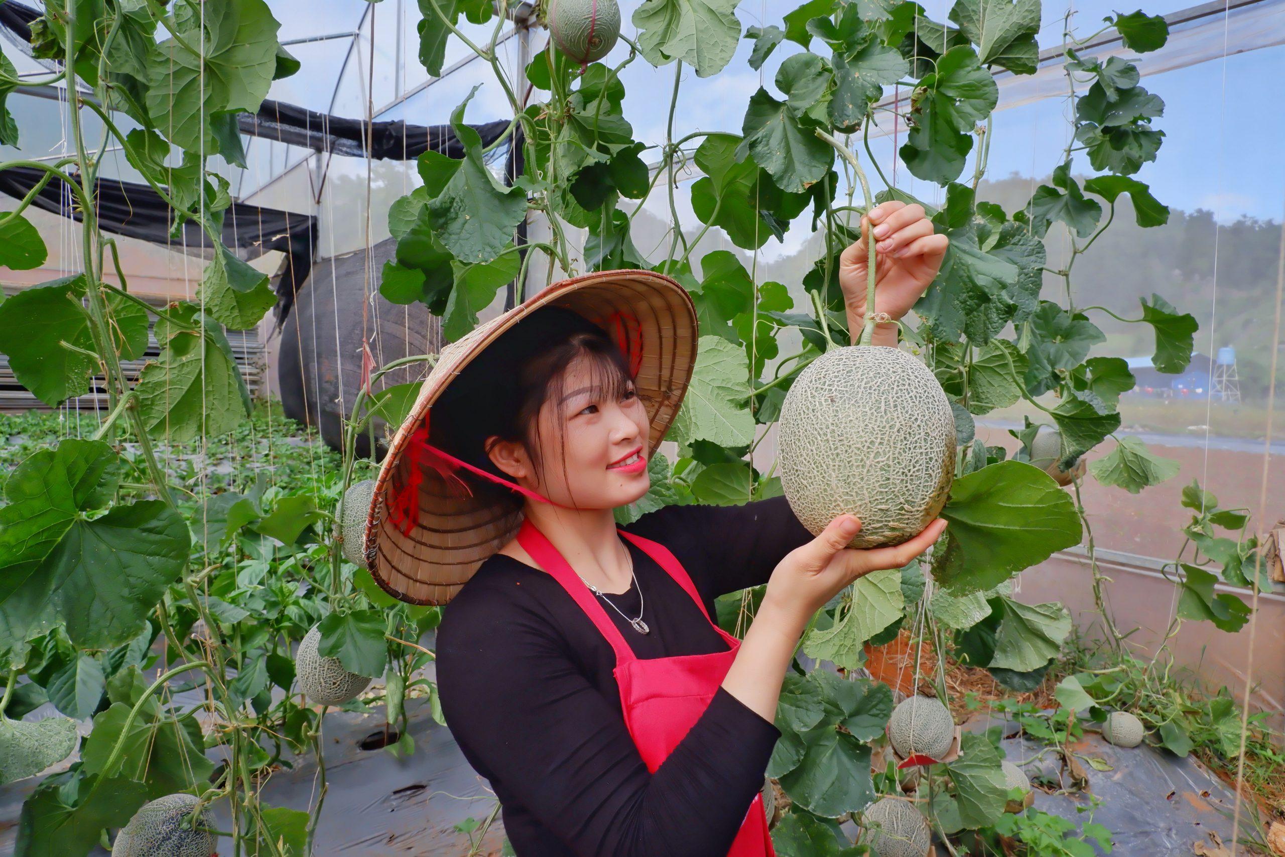Trong dưa lưới có nhiều chất dinh dưỡng tốt cho sức khỏe