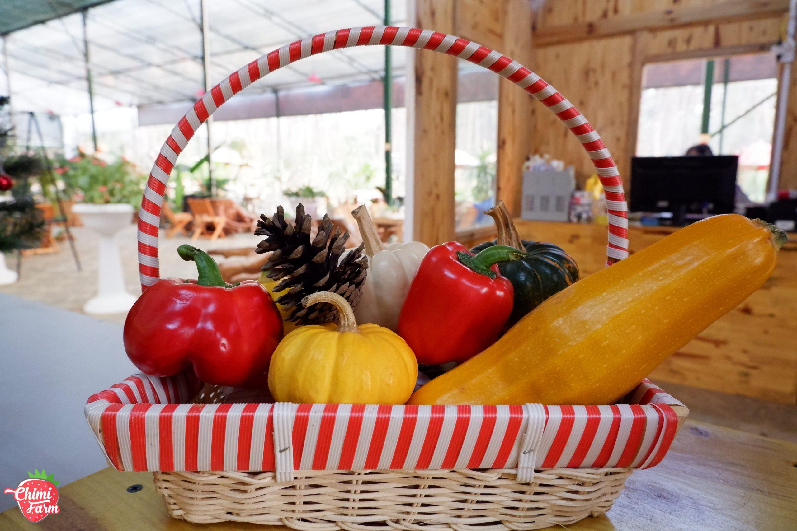 Chimi Farm có nhiều các loại rau, củ, quả như: bí ngô khổng lồ, dưa pepino, ớt chuông, sơri...