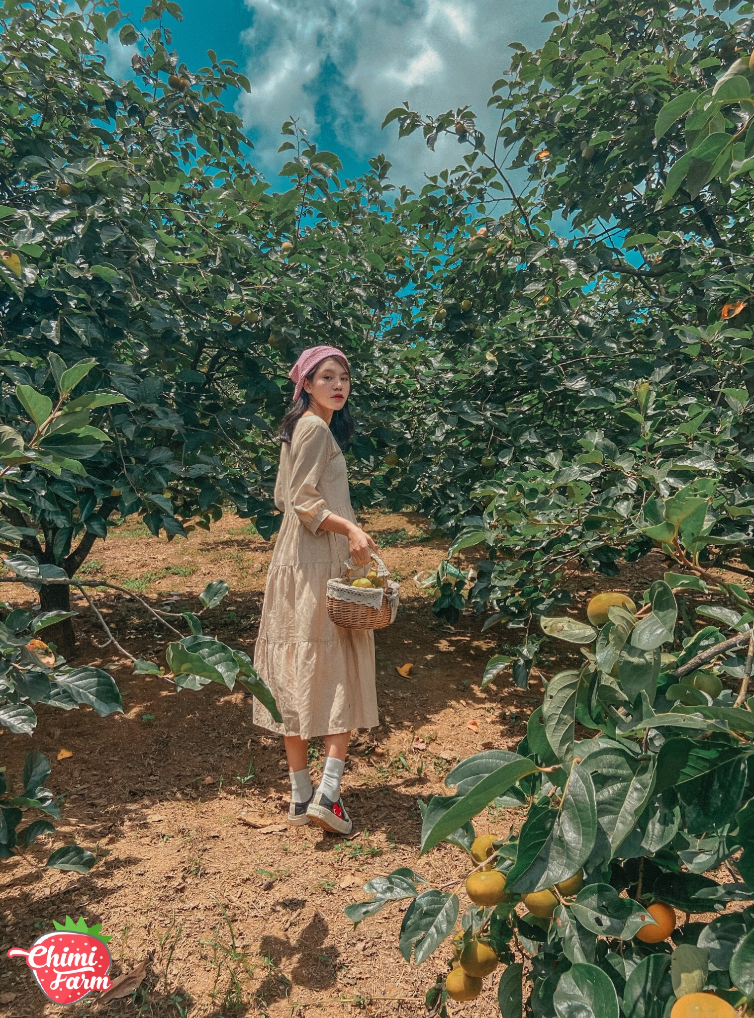 Lạc lối giữa vườn hồng Mộc Châu - Ảnh: Duyên Cao