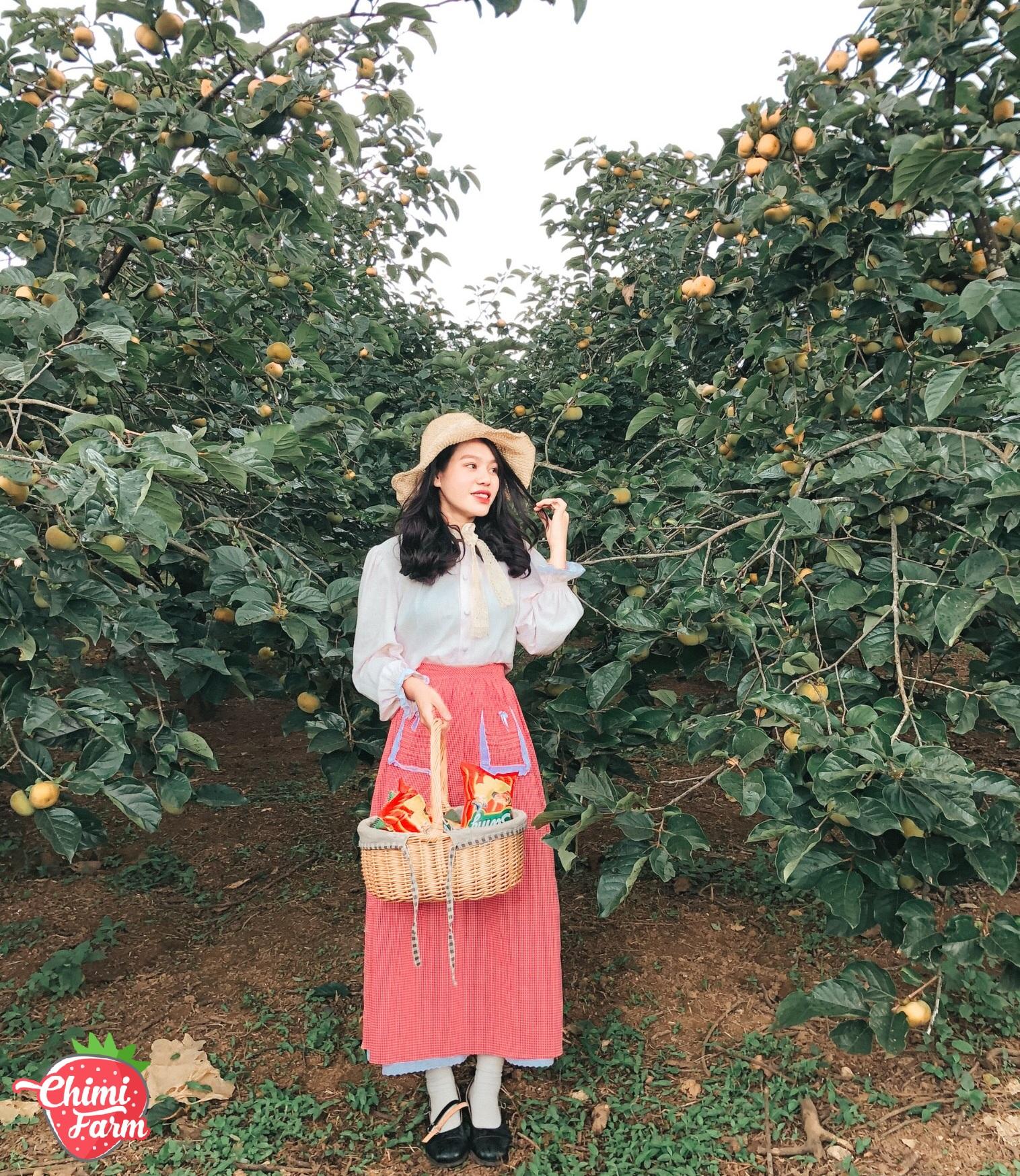 Giữa một vườn hồng sai trĩu quả  - Ảnh: Duyên Cao