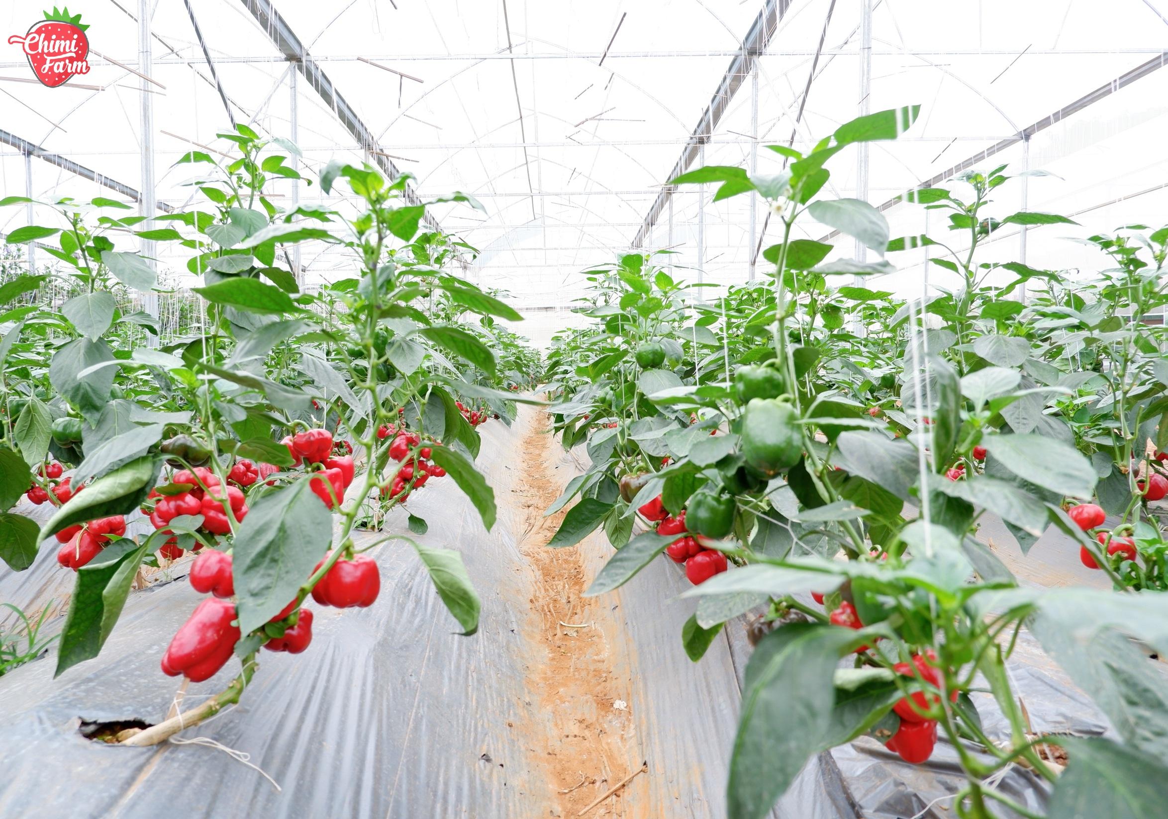 Tháng 10 Chimi Farm có gì?