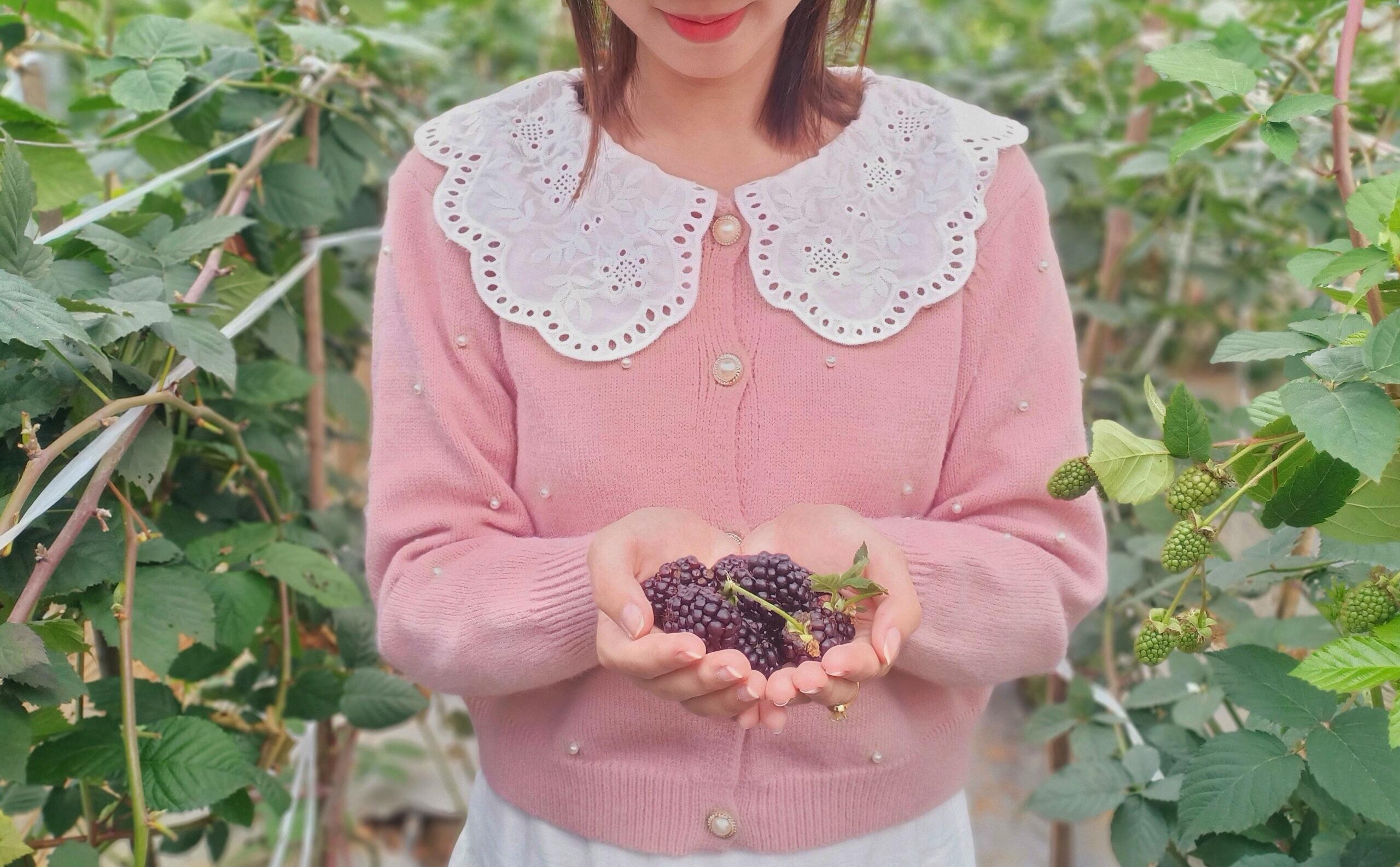 Phúc bồn tử đen được trồng thành công tại Chimi Farm 1