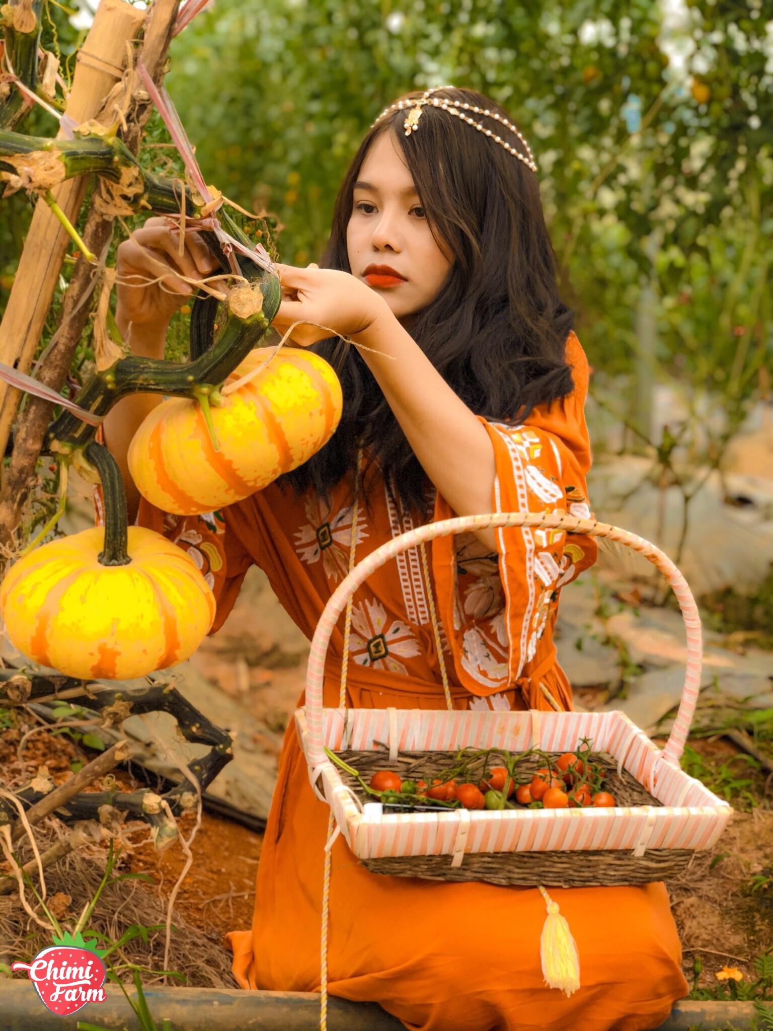 Vườn bí ngô là điểm check-in thần thánh của Chimi Farm