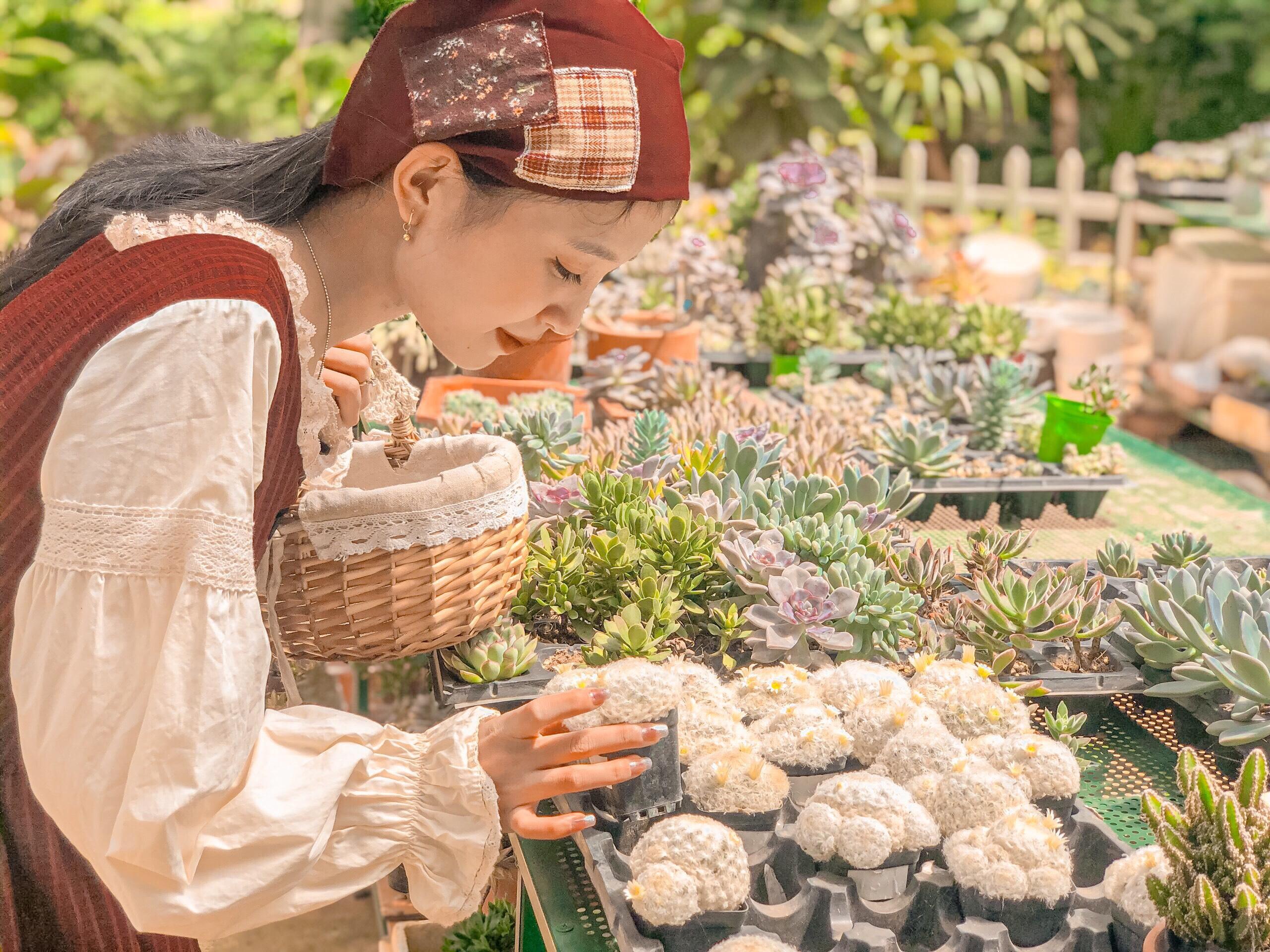 Vườn sen đá để bạn mua về làm quà lưu niệm cho bạn bè