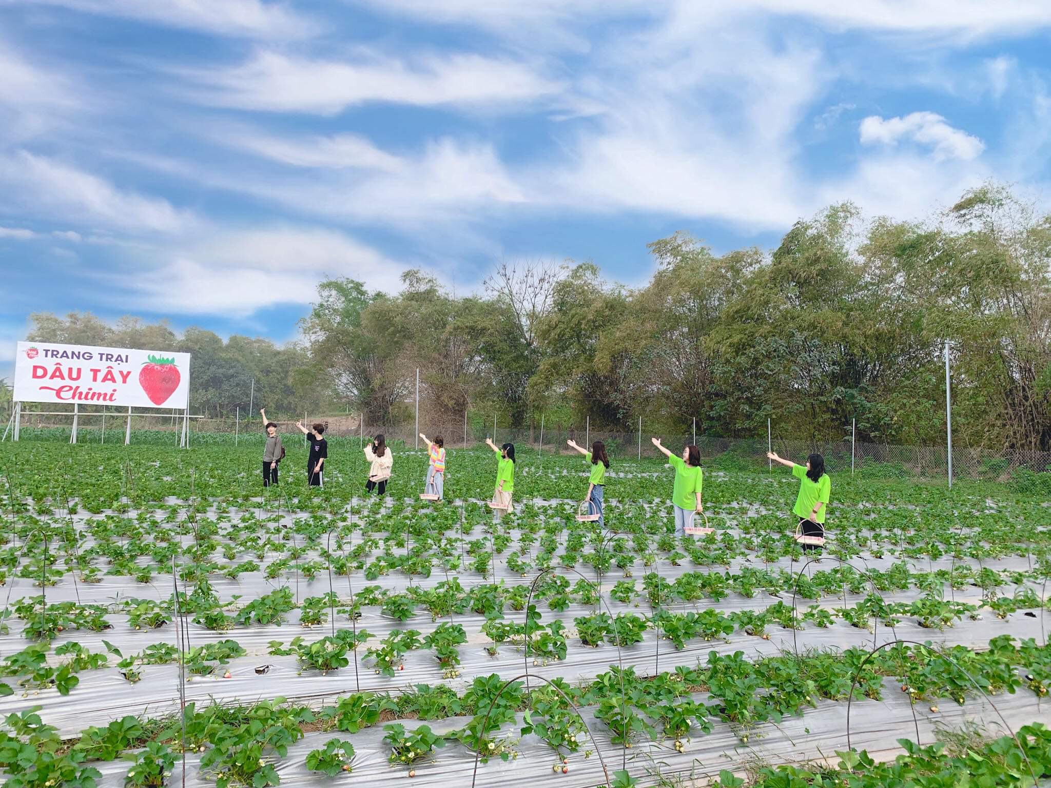 Vườn dâu tây cũng đang chuẩn bị chín rộ chờ bạn trải nghiệm
