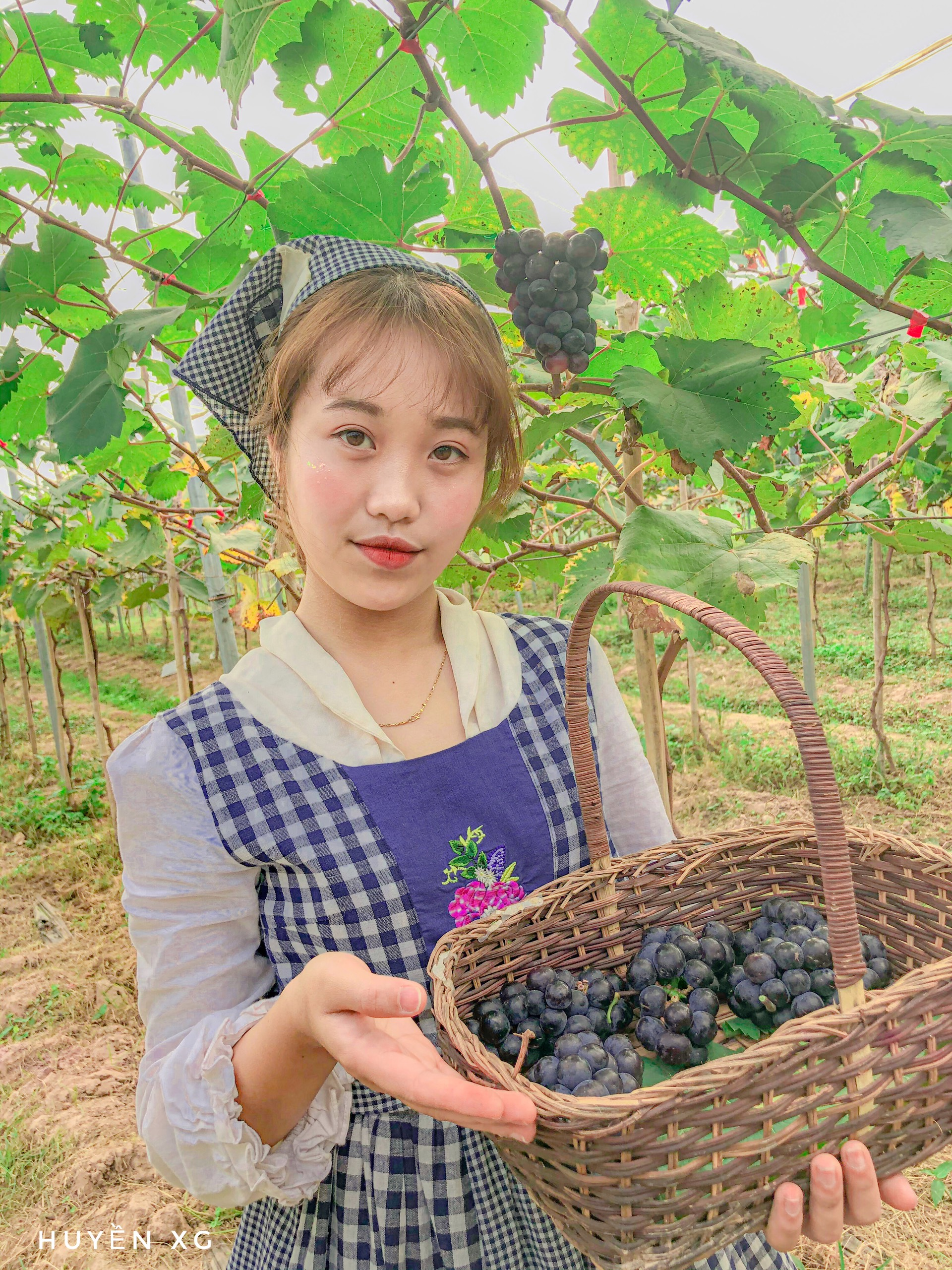 Vườn nho Chimi Farm Nhật Tân đang hút du khách tại Hà Nội