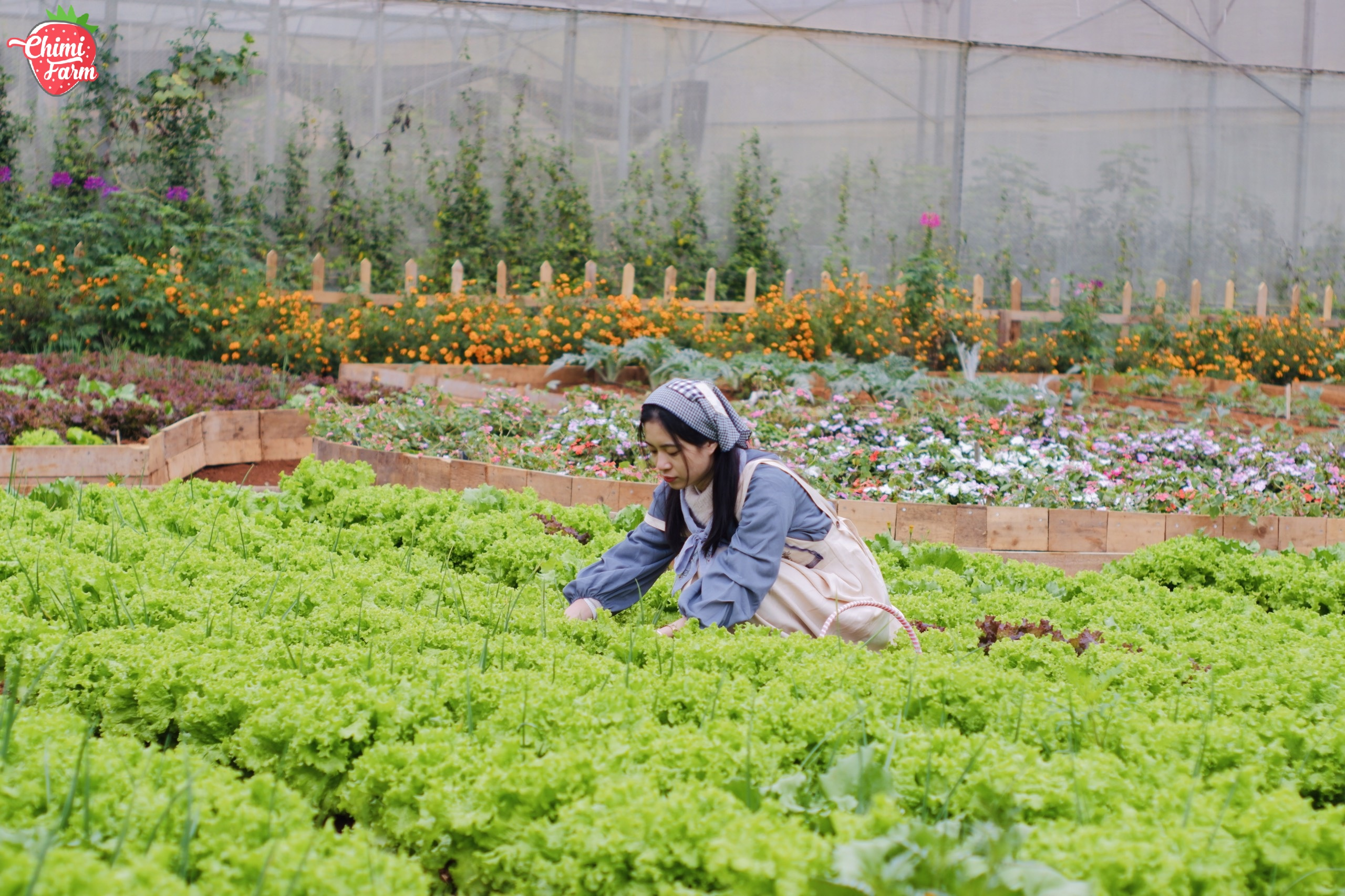 Liệu bạn có muốn về Mộc Châu trồng rau?