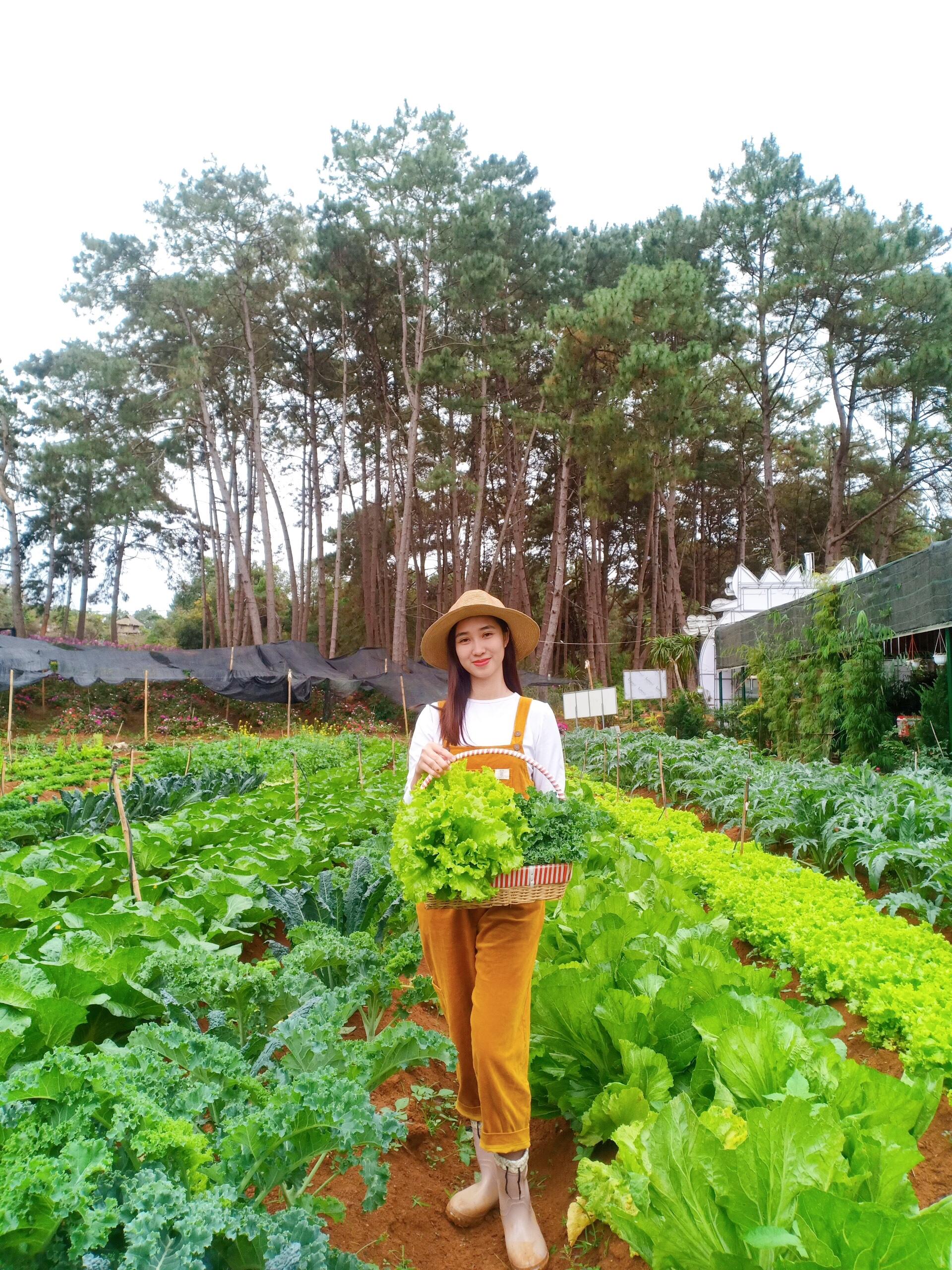 Nhà hàng buffet rau Chimi với vườn rau xanh ngát