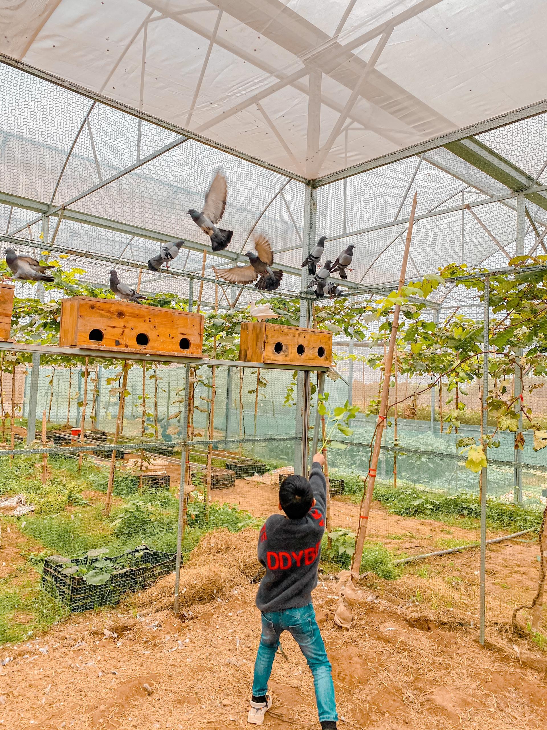 Vườn chim tham quan hoàn toàn miễn phí của Chimi Farm 4