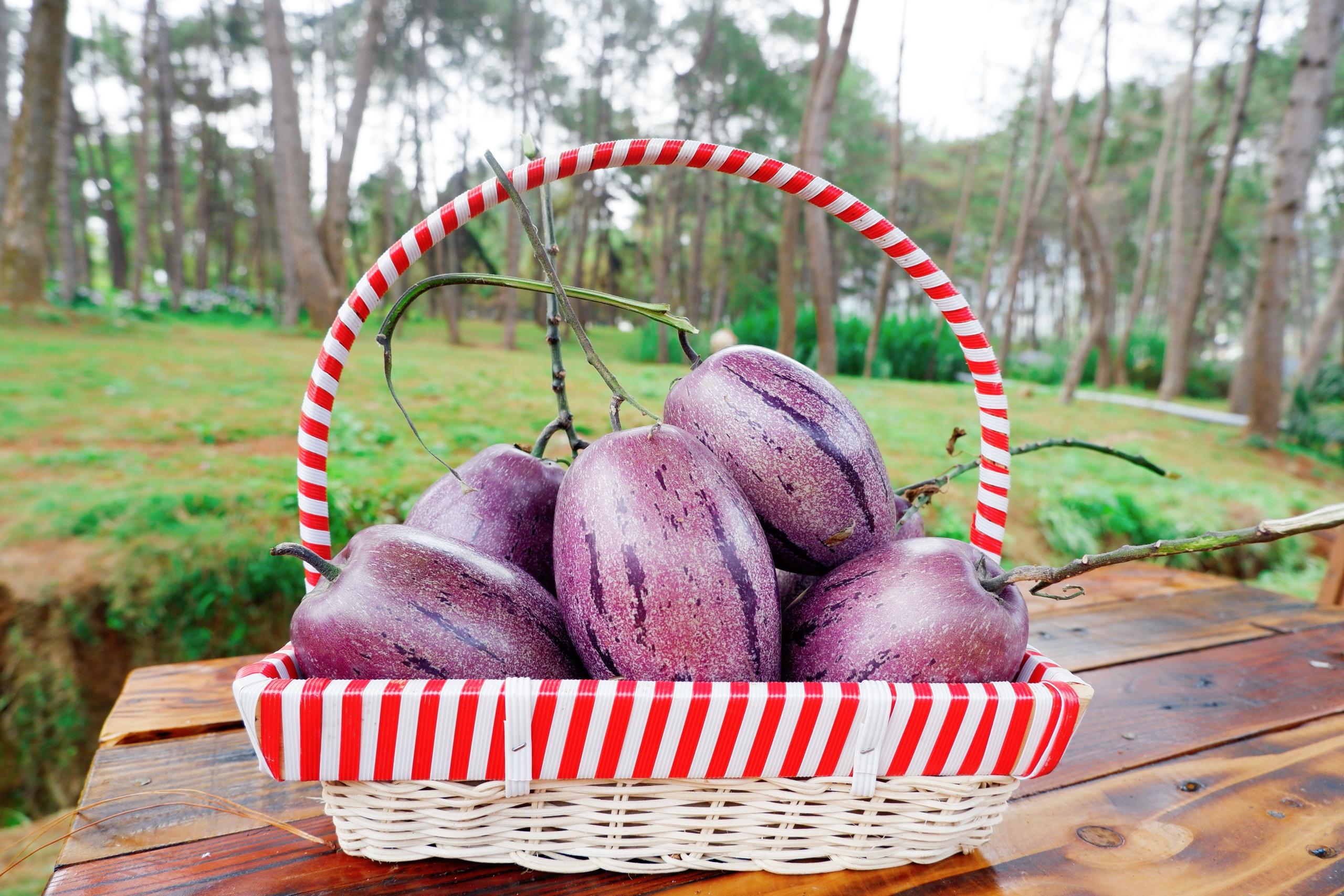 Hướng dẫn thu hoạch dưa pepino đúng cách
