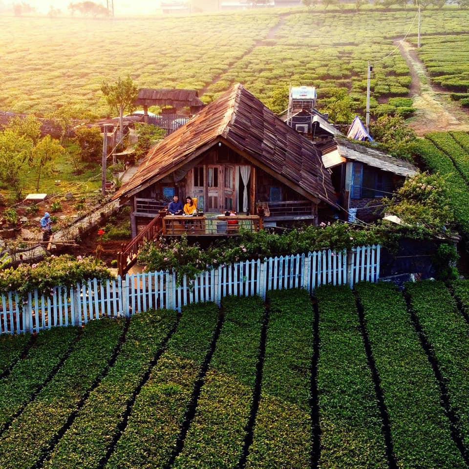 Homestay The Meadow nằm giữa không gian cánh đồng chè xanh ngút tầm mắt