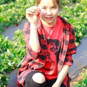 Hái dâu tây Mộc Châu tại Chimi Farm 2