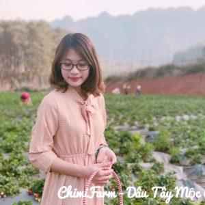 Hái dâu tây Mộc Châu tại Chimi Farm 3
