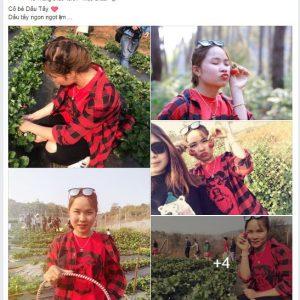 Hái dâu tây Mộc Châu tại Chimi Farm 5