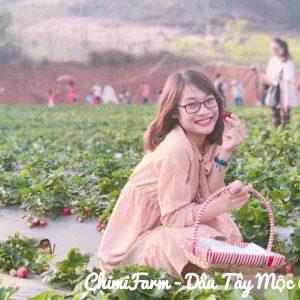 Hái dâu tây Mộc Châu tại Chimi Farm 5(1)