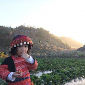 Trải nghiệm hái dâu tây Chimi Farm của nông dân nhí